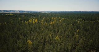Drone flying over amazing wide forest view. Aerial 4K birds eye shot of lush spring treetops and clear horizon valley