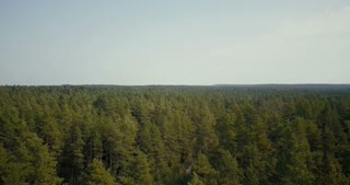 Drone flying over picturesque forest view. Aerial 4K birds eye shot of summer light green leaf treetops and small road.