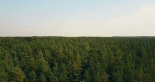 Drone flying right and forward over windy forest. Aerial 4K birds eye view of green and red leaf trees and small road.