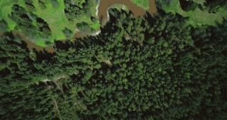 Drone flyover revealing dirty river in forest. Aerial 4K shot of nature. Ecology environmental pollution problems.