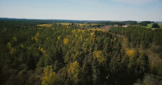 Drone spinning fast over beautiful ancient forest. Aerial 4K panning left shot of warm sunny forest horizon panorama.