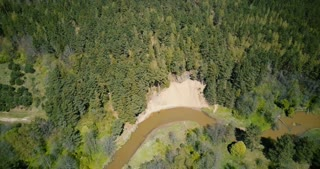 Drone spinning over quiet fall riverside nature. Aerial 4K vertical shot of warm sunny forest, river and small beach.