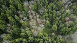 Top view of the mixed forest. Aerial drone shot of the beautiful landscape. Flight over the green trees.