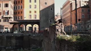 View of square of Largo di Torre Argentina in Rome, Italy. Location of archeological dig. The cat sits on excavation.