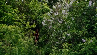 Young couple walk in forest through the lilac bushes. Lovers in nature. Slow mo, steadicam shot, backview