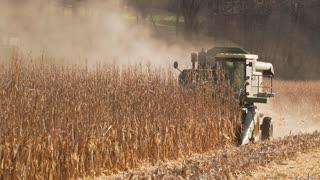Scenes of harvesting corn