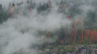 Time lapse of clouds drifting through the trees of Yosemite