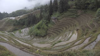Rice terrace of Ping an China