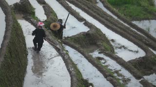 Two Zhuang rice farmers working the land