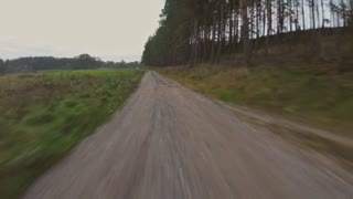 POV video footage of driving in a forest in autumn.