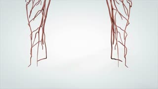 3D Animated Model Rotating Human Nervous System