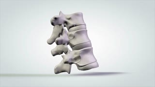 3D Rotating Anatomical Model Human Vertebrae