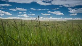 4K Closeup Dolly Shot Through Green Grass