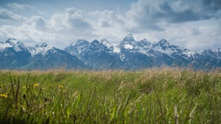 4K dolly shot over grassy meadow and Grand Tetons in the background