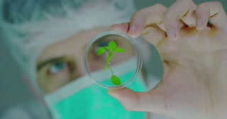 A scientist in a laboratory analyzes the soil and the plants inside to collect the plant DNA. Concept: analysis, dna, bio, microbiology, augmented reality, biochemistry, immersive technology