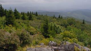 Lush green foliage and Appalachians