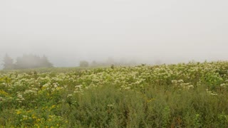 Field of wild flowers in the fog