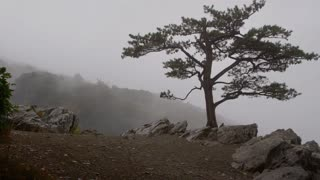Lone tree standing on a cliff in fog