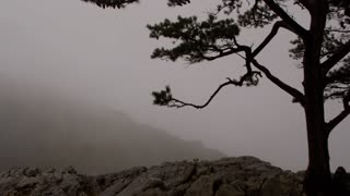 Lone tree standing on a cliff close