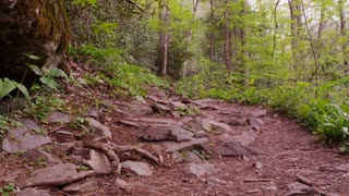 Hiking trail in the woods of the Great Smoky Mountains National Park forest slide left