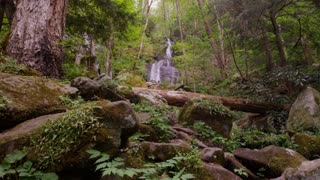 Waterfall in lush woods of Great Smoky Mountains National Park forest slider left wide