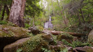 Waterfall in lush woods of Great Smoky Mountains National Park forest slider right wide