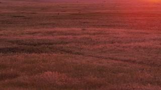 Pan across grass prairie at sunset in Badlands South Dakota