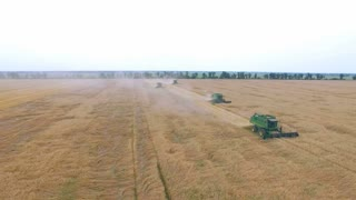 aerial 4K wheat harvesting