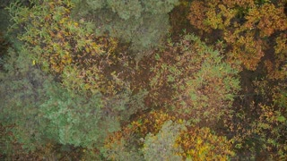 AERIAL: Above the colorful autumn forest