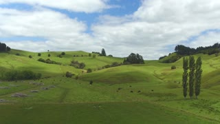 AERIAL: Beautiful lush green landscape in New Zealand