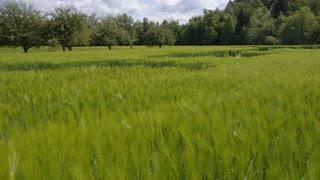 AERIAL: Crop formation