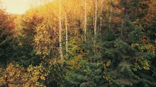 Aerial Drone Footage: Rise up panorama shooting of autumn forest with mountain peak in sunset light. Carpathian Mountains, Ukraine, Europe. Majestic landscape. Beauty world. 4K resolution