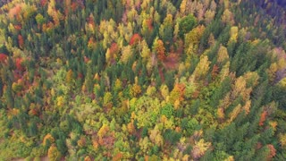Aerial Drone Footage: Rise up panorama shooting of autumn mountains peak with forests in sunset light. Carpathian Mountains, Ukraine, Europe. Majestic landscape. Beauty world. 4K resolution