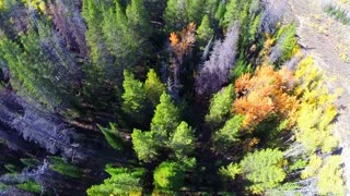 Aerial fall foliage flyover straight down