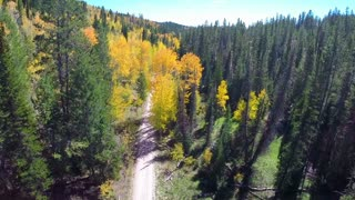 Aerial fall foliage road flyover 1