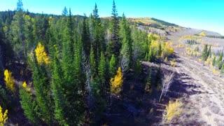 Aerial fall foliage