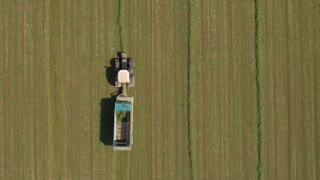 AERIAL: Farmer in tractor working on farm field and collecting fodder in swaths