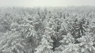 AERIAL: Flying above beautiful winter forest