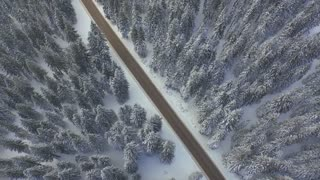 AERIAL: Flying over the road in winter pine forest