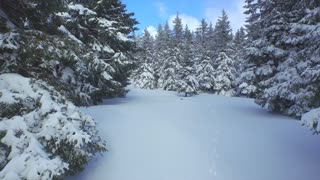 AERIAL: Following the footsteps in snow through winter forest