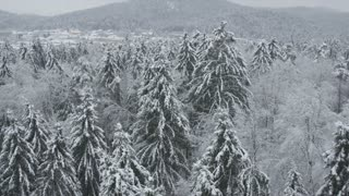 AERIAL: Forest in winter