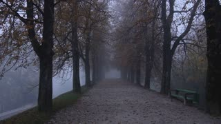 AERIAL: Misty tree avenue