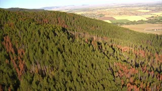 Aerial Shot Of Fields And Forests With Dead Trees