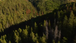 Aerial Shot Of Forest And Mountainside