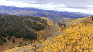 Aerial shot of golden Aspen trees in autumn with fall foliage
