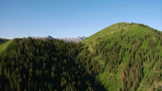 Aerial Shot Of Green Forest And Mountains