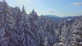 AERIAL: Snowy forest on a sunny winter day
