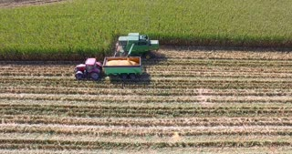 Aerial view of agricultural machinery mulchers and harvesters as they work in a field of maize or corn in perfect natural atmosphere , biological hydro , ancient Italian traditions .
