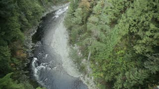 Aerial view of water and trees 1