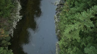 Aerial view of water and trees 3